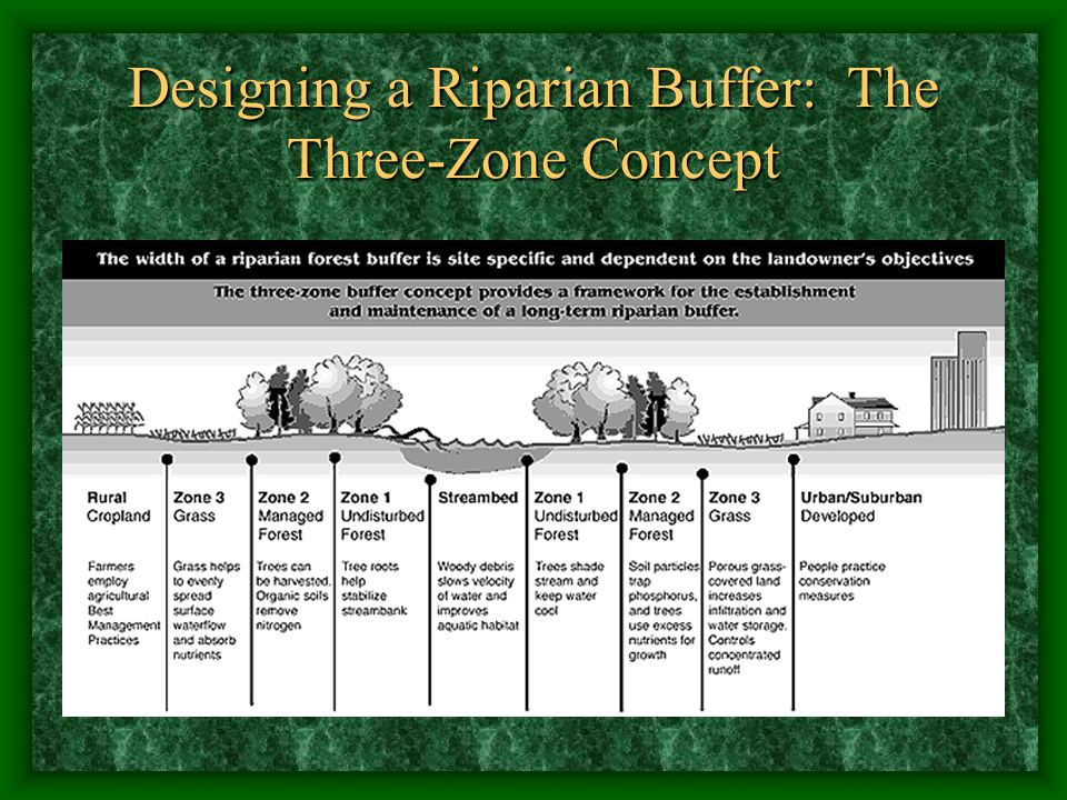 Designing a Riparian Buffer: The Three-Zone Concept