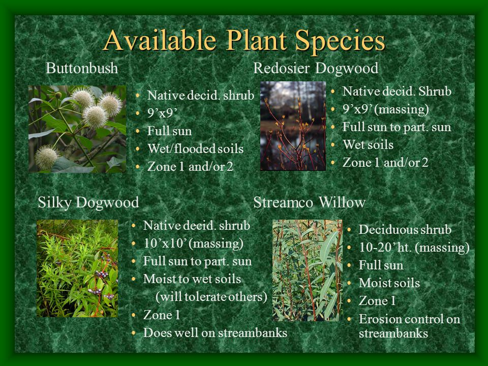 Available Plant Species Native decid.