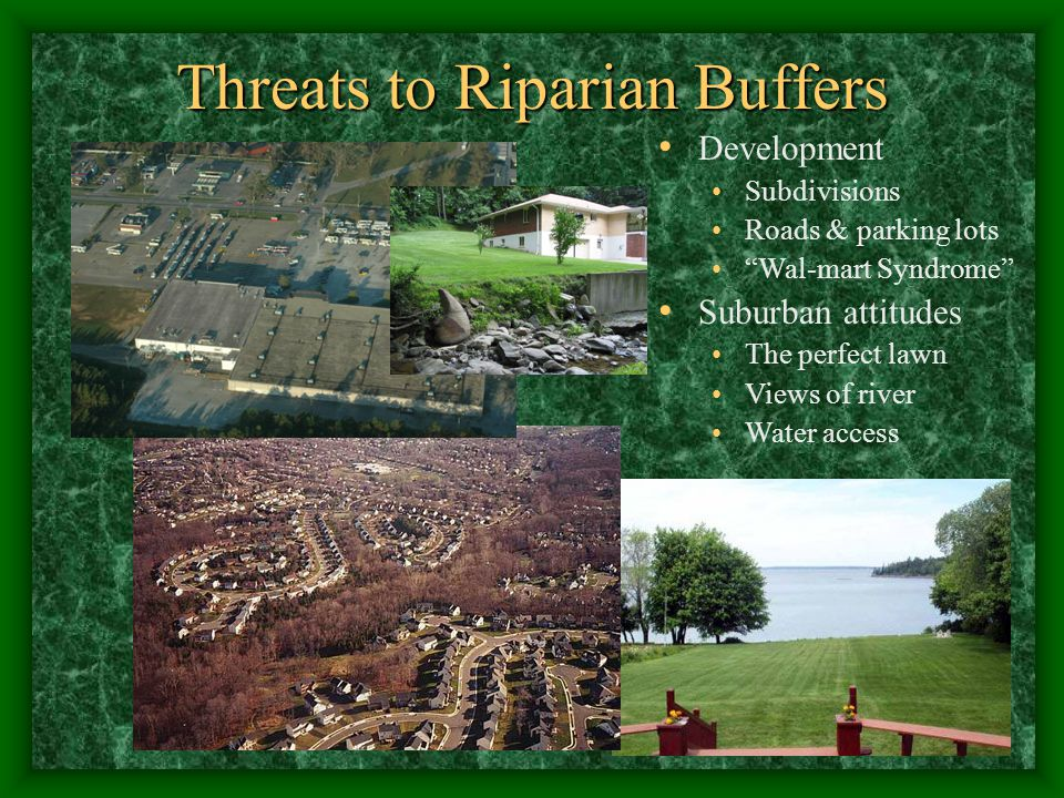 Threats to Riparian Buffers Development Subdivisions Roads & parking lots Wal-mart Syndrome Suburban attitudes The perfect lawn Views of river Water access