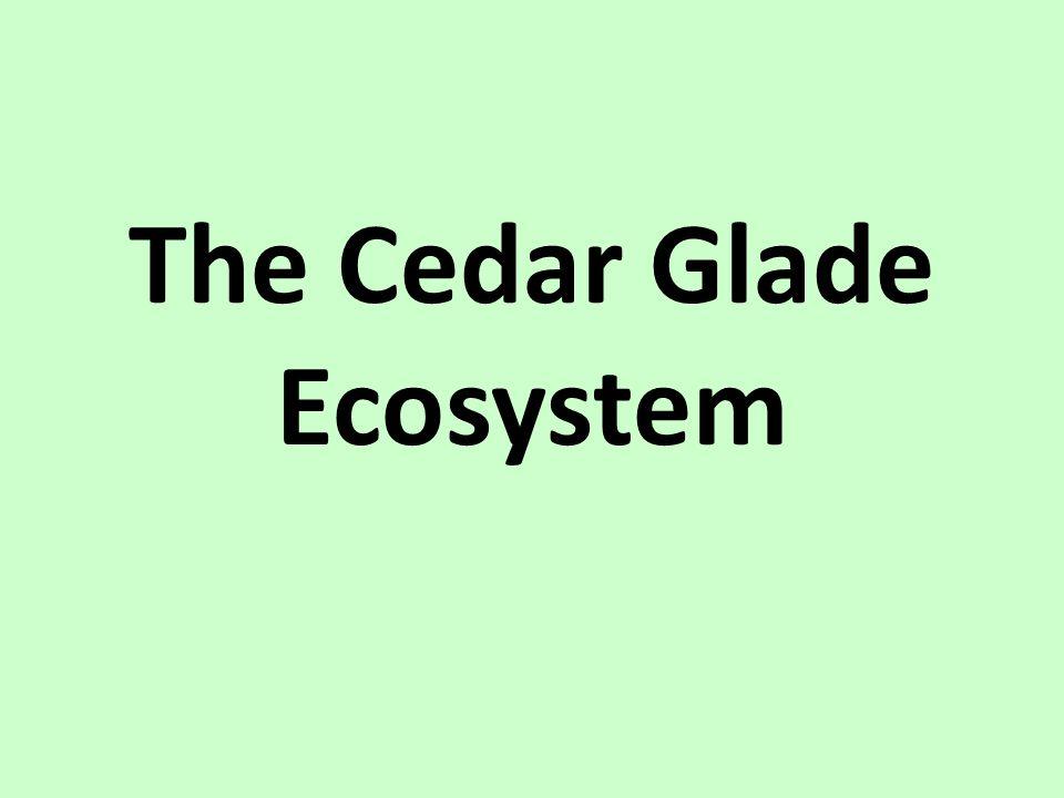 The Cedar Glade Ecosystem