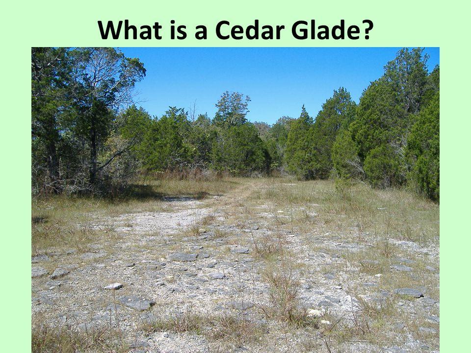 What is a Cedar Glade