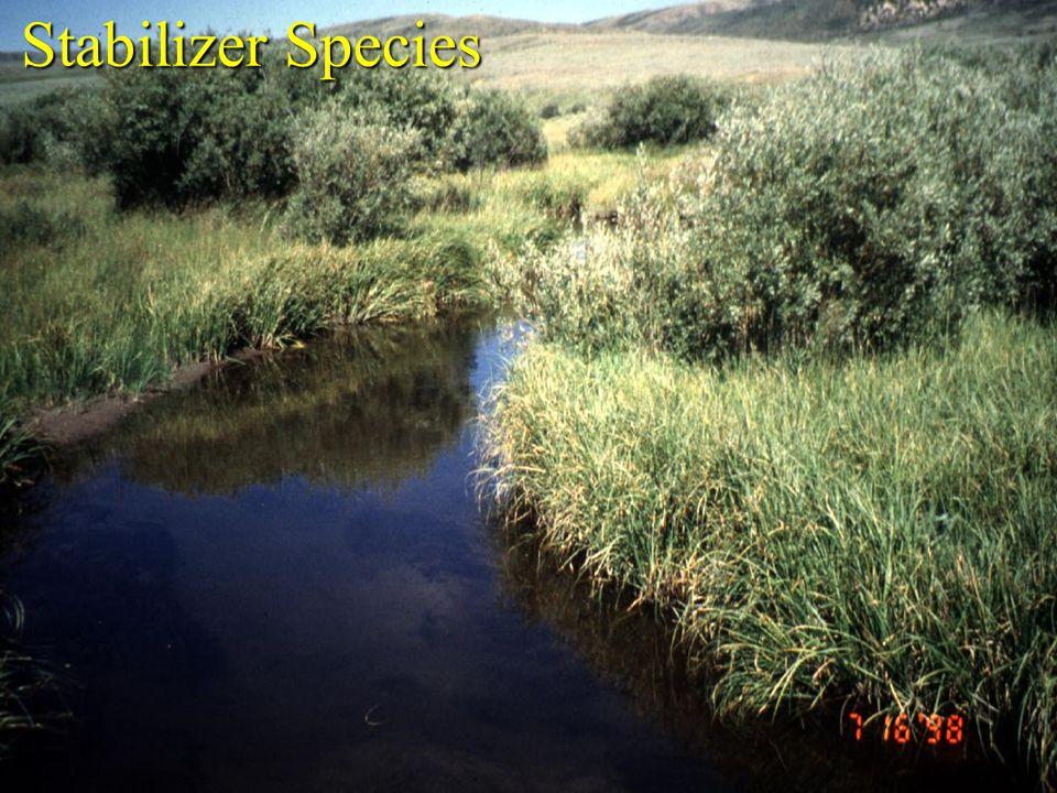 Stabilizer Species