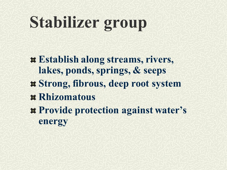 Stabilizer group Establish along streams, rivers, lakes, ponds, springs, & seeps Strong, fibrous, deep root system Rhizomatous Provide protection against water's energy