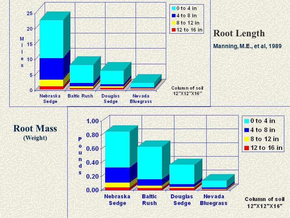 Root Length Manning, M.E., et al, 1989 Root Mass (Weight)