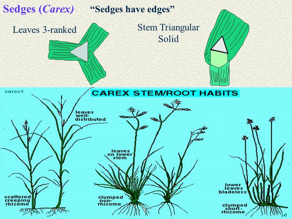 Sedges (Carex) Leaves 3-ranked Stem Triangular Solid Sedges have edges