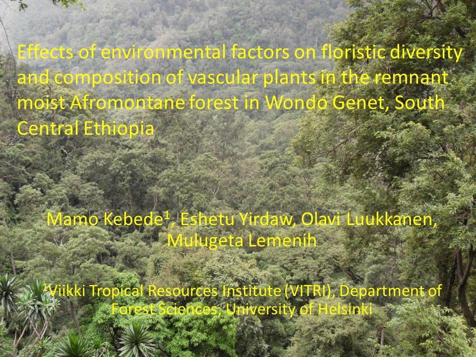 Effects of environmental factors on floristic diversity and composition of vascular plants in the remnant moist Afromontane forest in Wondo Genet, South Central Ethiopia Mamo Kebede 1, Eshetu Yirdaw, Olavi Luukkanen, Mulugeta Lemenih 1 Viikki Tropical Resources Institute (VITRI), Department of Forest Sciences, University of Helsinki