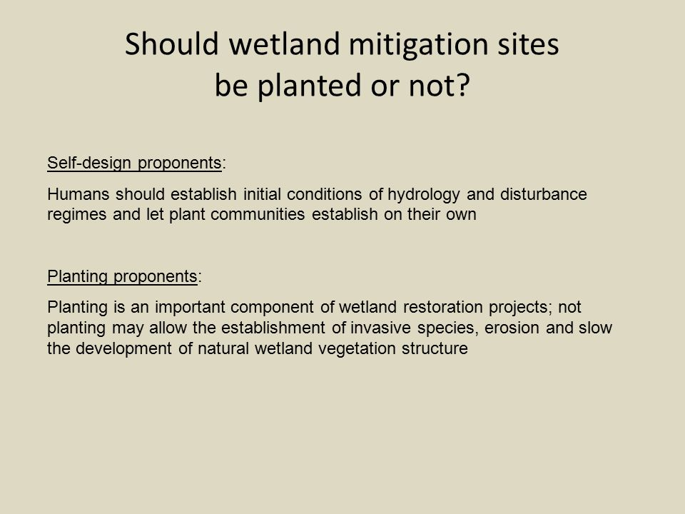 Should wetland mitigation sites be planted or not.