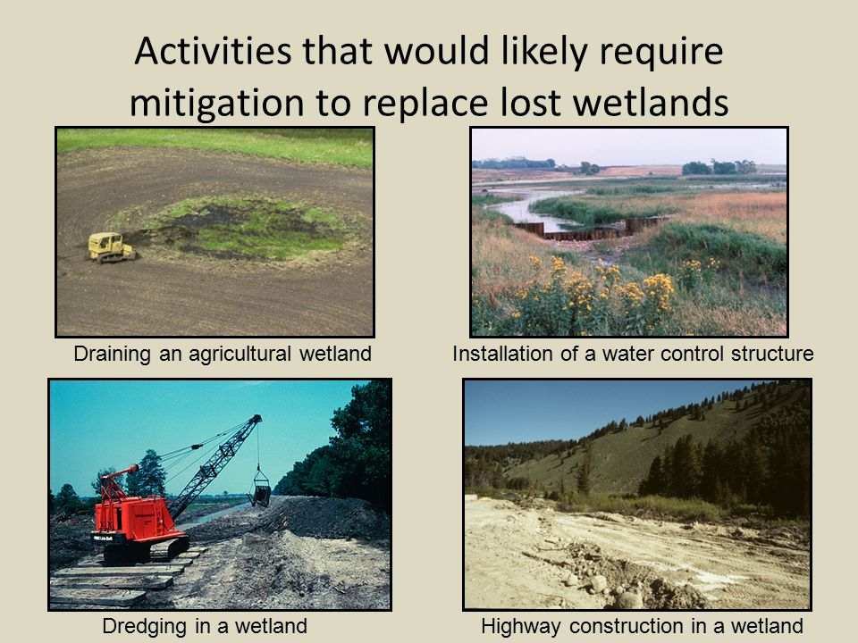 The Origins of Wetland Mitigation Compensatory mitigation was seen as a way that we could have both development and conservation