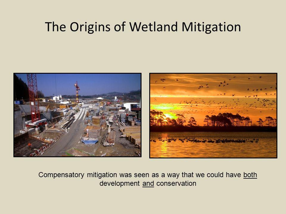 Initial shortcomings of wetland mitigation Wetland mitigation site in Salem, Oregon
