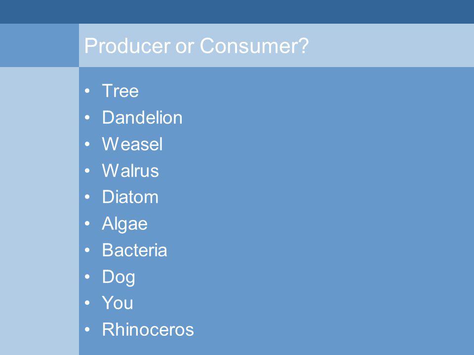 Producer or Consumer? Tree Dandelion Weasel Walrus Diatom Algae Bacteria Dog You Rhinoceros