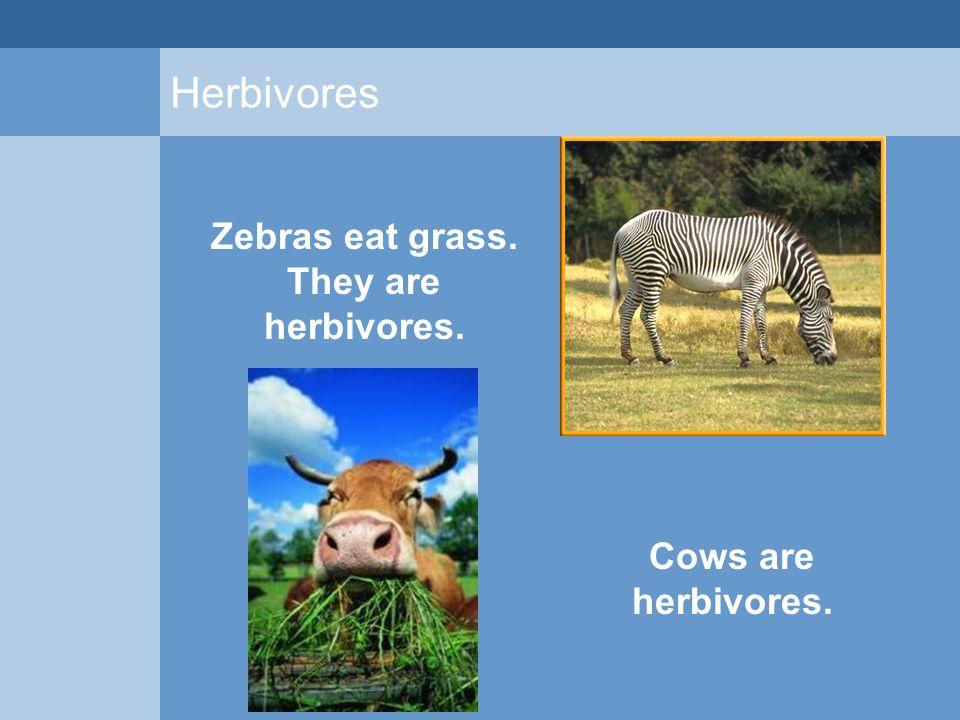 Herbivores Zebras eat grass. They are herbivores. Cows are herbivores.