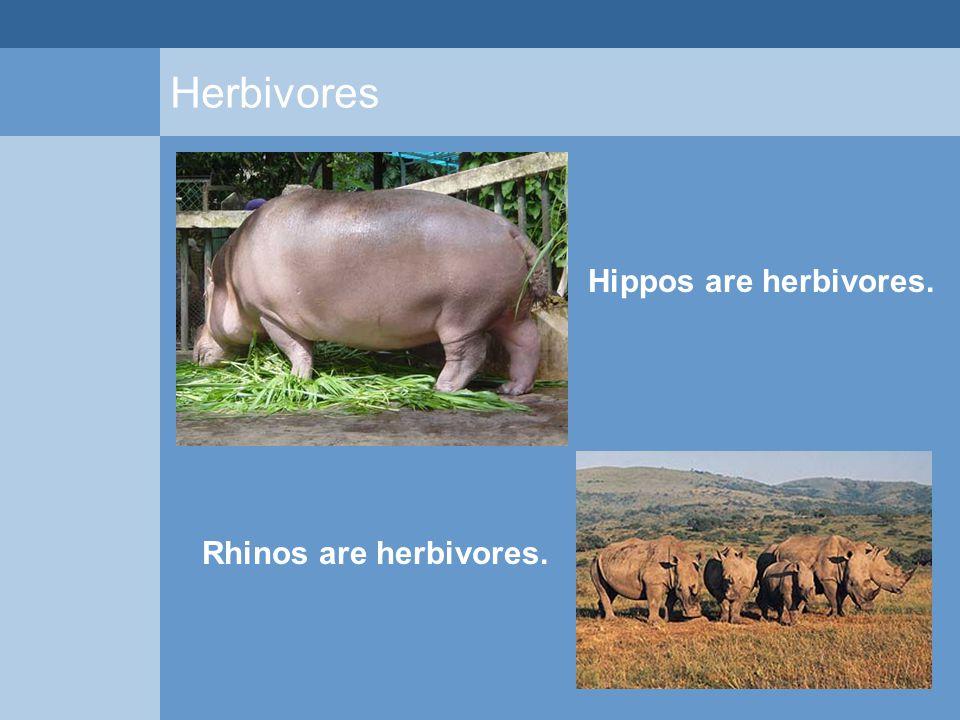 Herbivores Hippos are herbivores. Rhinos are herbivores.