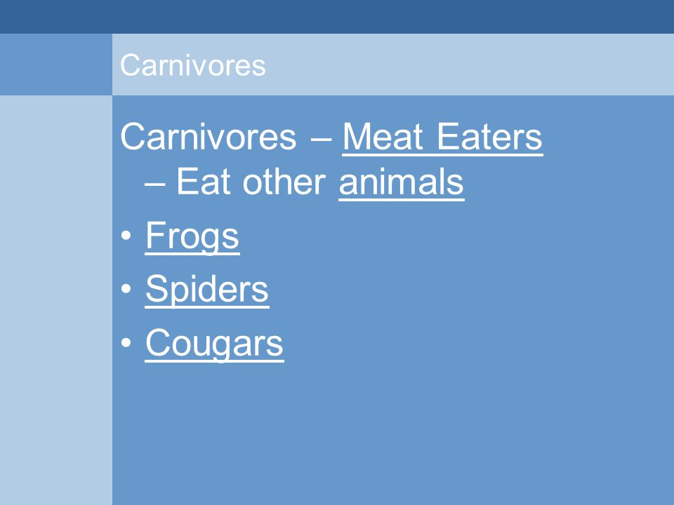 Carnivores Carnivores – Meat Eaters – Eat other animals Frogs Spiders Cougars