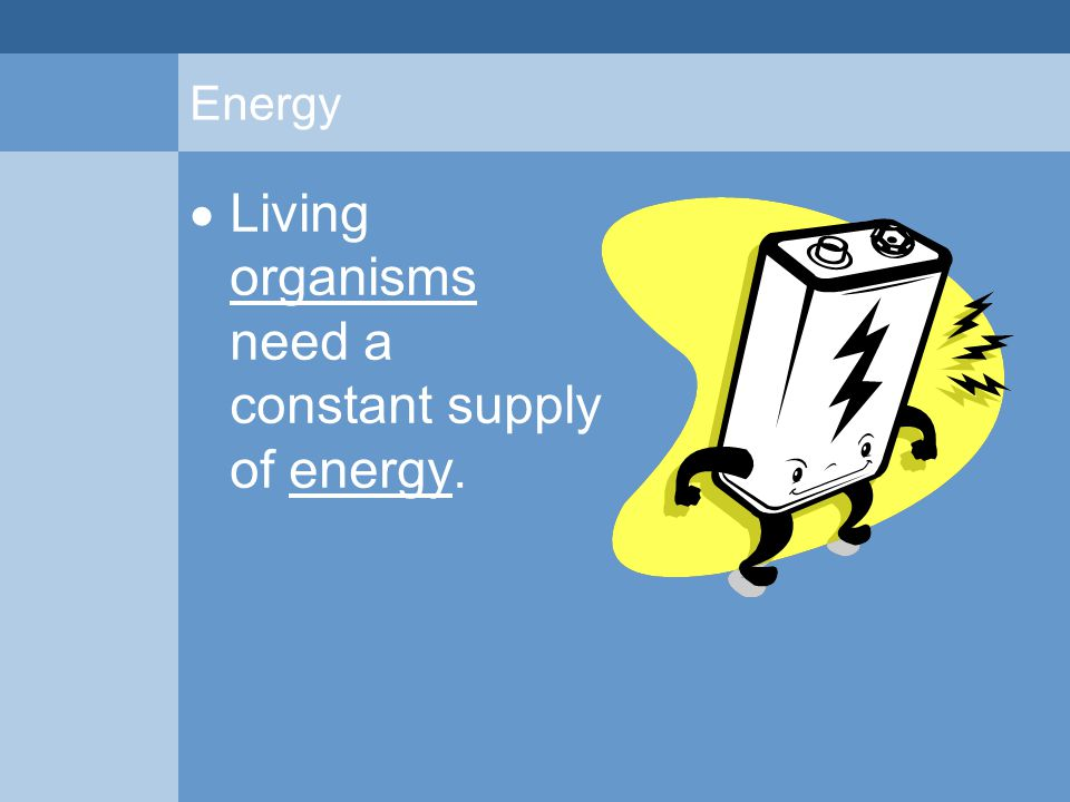 Consumer A consumer is an organism that cannot make their own energy-rich molecules.