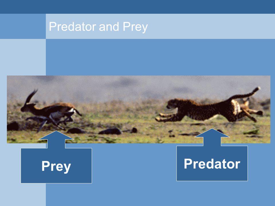 Predator and Prey Prey Predator