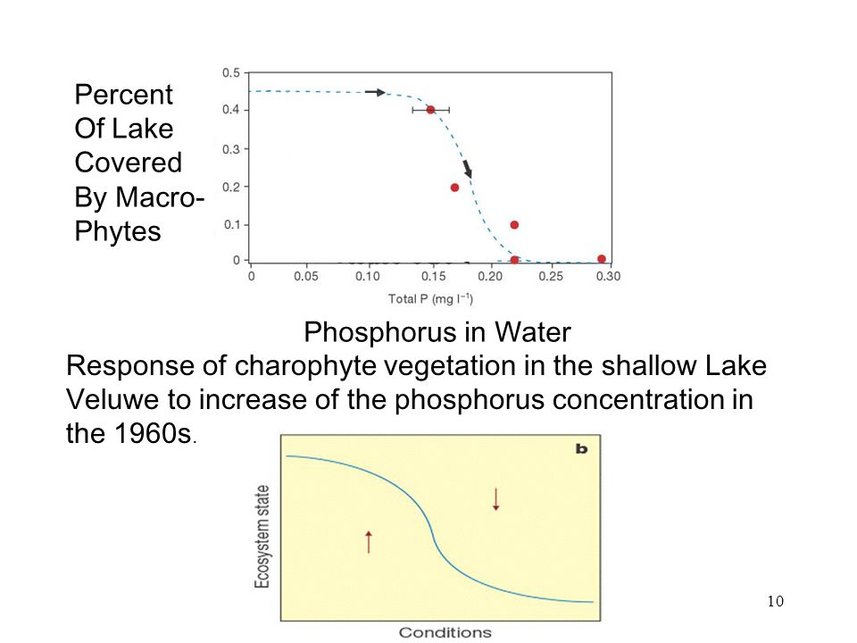 10 Response of charophyte vegetation in the shallow Lake Veluwe to increase of the phosphorus concentration in the 1960s.