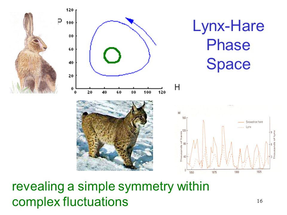 16 Lynx-Hare Phase Space revealing a simple symmetry within complex fluctuations