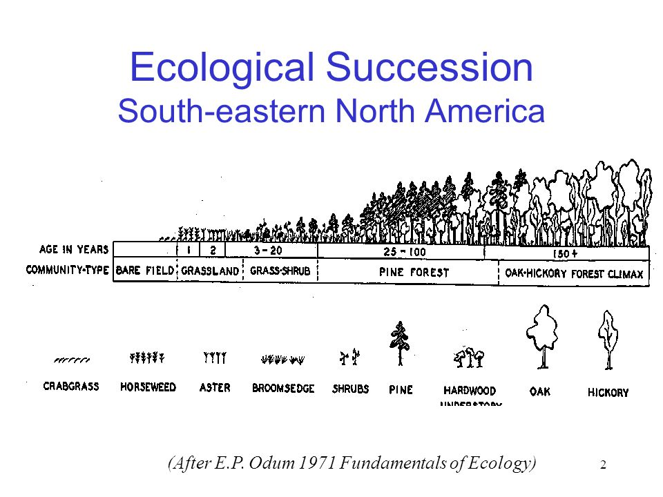 2 Ecological Succession South-eastern North America (After E.P. Odum 1971 Fundamentals of Ecology)