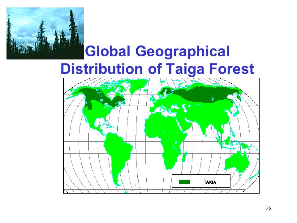 28 Global Geographical Distribution of Taiga Forest