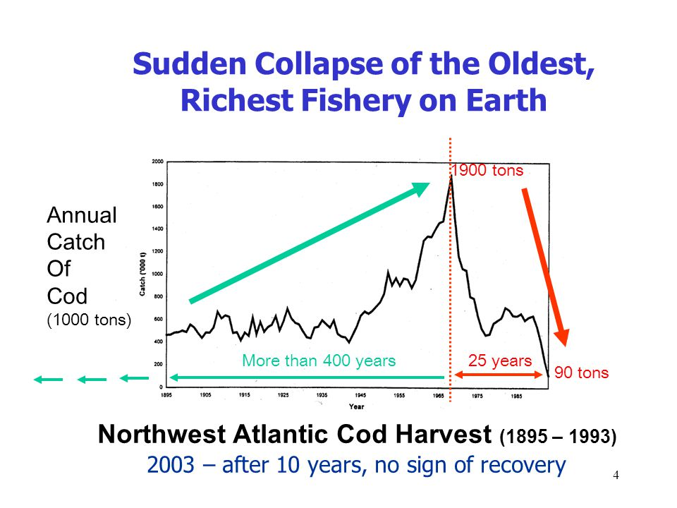 4 Sudden Collapse of the Oldest, Richest Fishery on Earth Northwest Atlantic Cod Harvest (1895 – 1993) Annual Catch Of Cod (1000 tons) 1900 tons 90 tons 25 yearsMore than 400 years 2003 – after 10 years, no sign of recovery