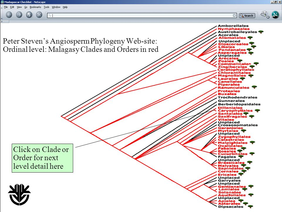 Peter Steven's Angiosperm Phylogeny Web-site: Ordinal level: Malagasy Clades and Orders in red Click on Clade or Order for next level detail here