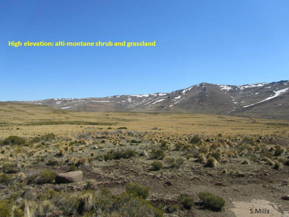 S.Mills High elevation: alti-montane shrub and grassland