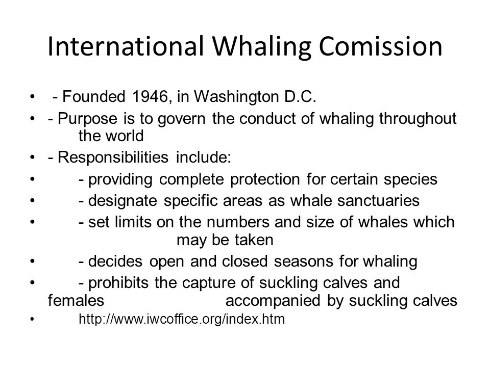 International Whaling Comission - Founded 1946, in Washington D.C. - Purpose is to govern the conduct of whaling throughout the world - Responsibiliti