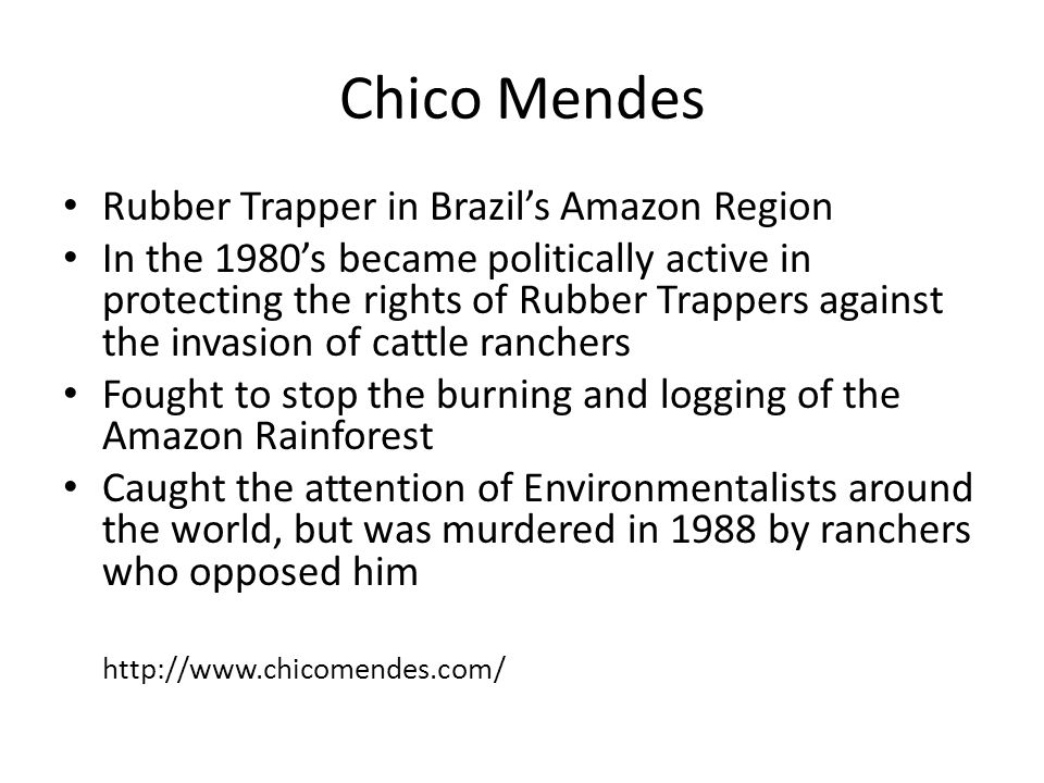 Chico Mendes Rubber Trapper in Brazil's Amazon Region In the 1980's became politically active in protecting the rights of Rubber Trappers against the
