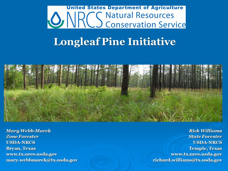 Longleaf Pine Initiative  Longleaf pine forests once encompassed more than 90 million acres of the North American landscape.