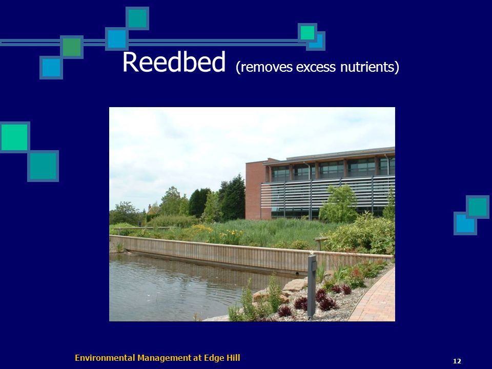 Environmental Management at Edge Hill 12 Reedbed (removes excess nutrients)