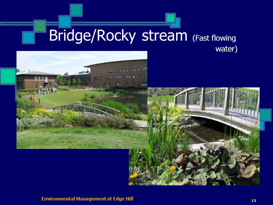 Environmental Management at Edge Hill 13 Bridge/Rocky stream (Fast flowing water)