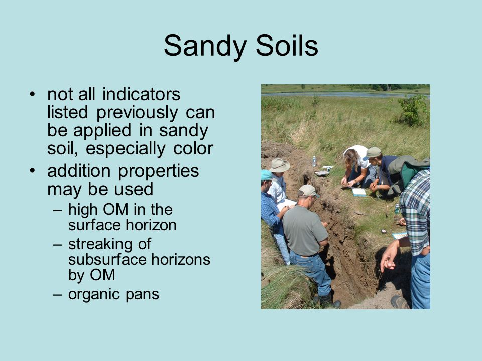 Sandy Soils not all indicators listed previously can be applied in sandy soil, especially color addition properties may be used –high OM in the surface horizon –streaking of subsurface horizons by OM –organic pans