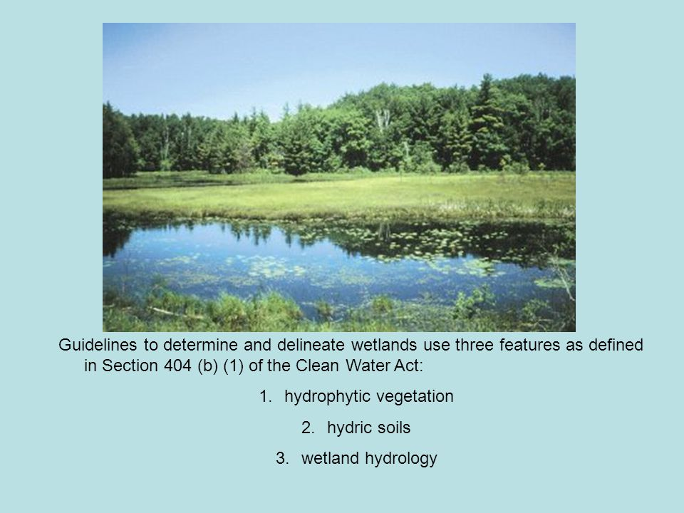 Guidelines to determine and delineate wetlands use three features as defined in Section 404 (b) (1) of the Clean Water Act: 1.hydrophytic vegetation 2.hydric soils 3.wetland hydrology
