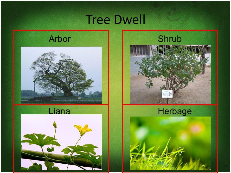 12 Tree Dwell ArborShrub LianaHerbage