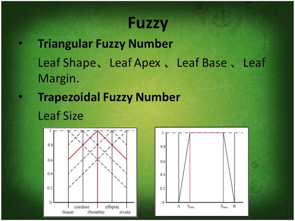 13 Fuzzy Triangular Fuzzy Number Leaf Shape 、 Leaf Apex 、 Leaf Base 、 Leaf Margin. Trapezoidal Fuzzy Number Leaf Size