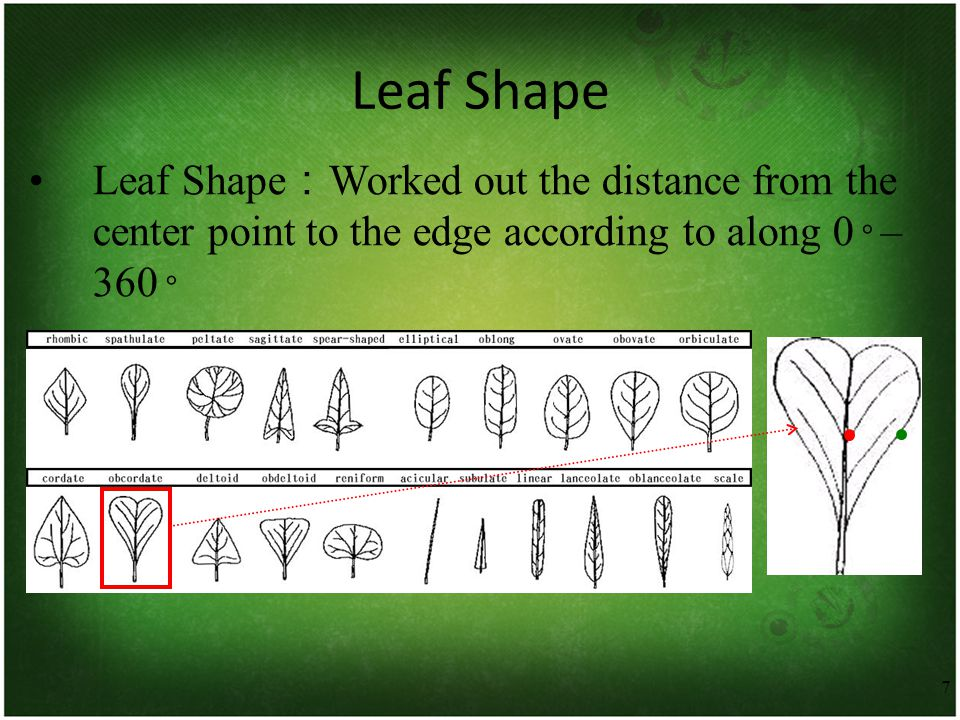 7 Leaf Shape Leaf Shape : Worked out the distance from the center point to the edge according to along 0 ◦ – 360 ◦