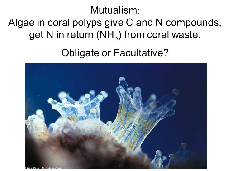 Mutualism : Algae in coral polyps give C and N compounds, get N in return (NH 3 ) from coral waste. Obligate or Facultative?
