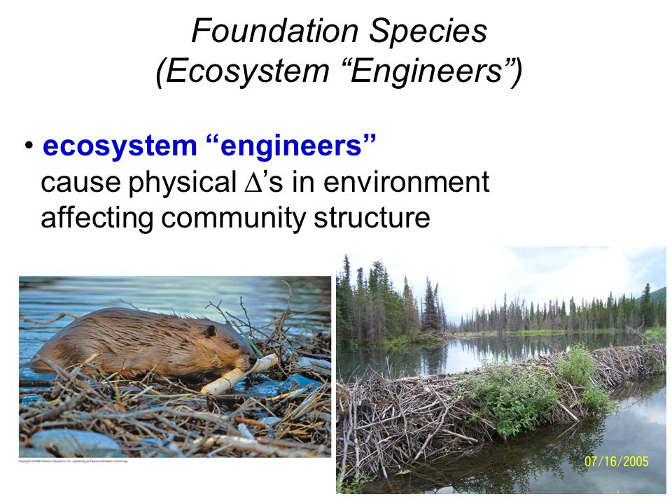 "Foundation Species (Ecosystem ""Engineers"") ecosystem ""engineers"" cause physical  's in environment affecting community structure"