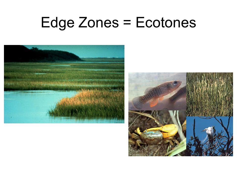 Edge Zones = Ecotones