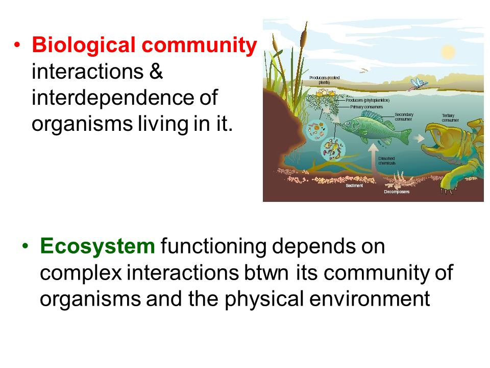 Biological community interactions & interdependence of organisms living in it. Ecosystem functioning depends on complex interactions btwn its communit