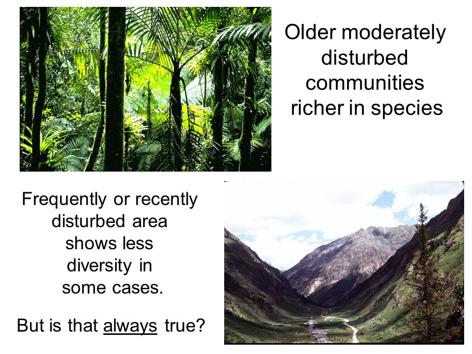 Older moderately disturbed communities richer in species Frequently or recently disturbed area shows less diversity in some cases. But is that always
