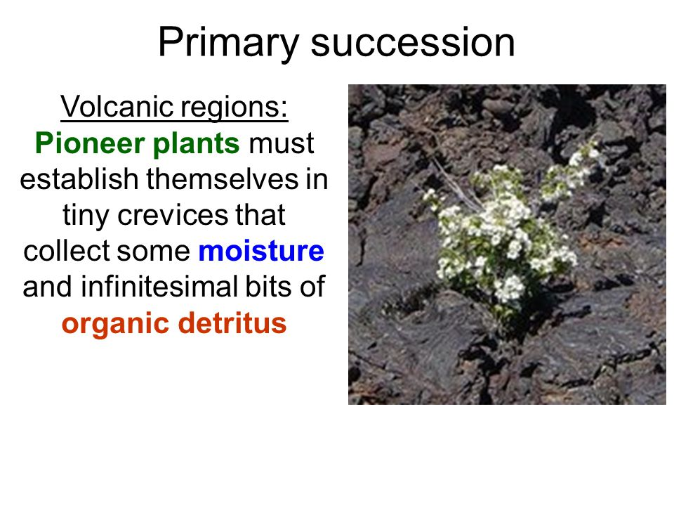 Volcanic regions: Pioneer plants must establish themselves in tiny crevices that collect some moisture and infinitesimal bits of organic detritus