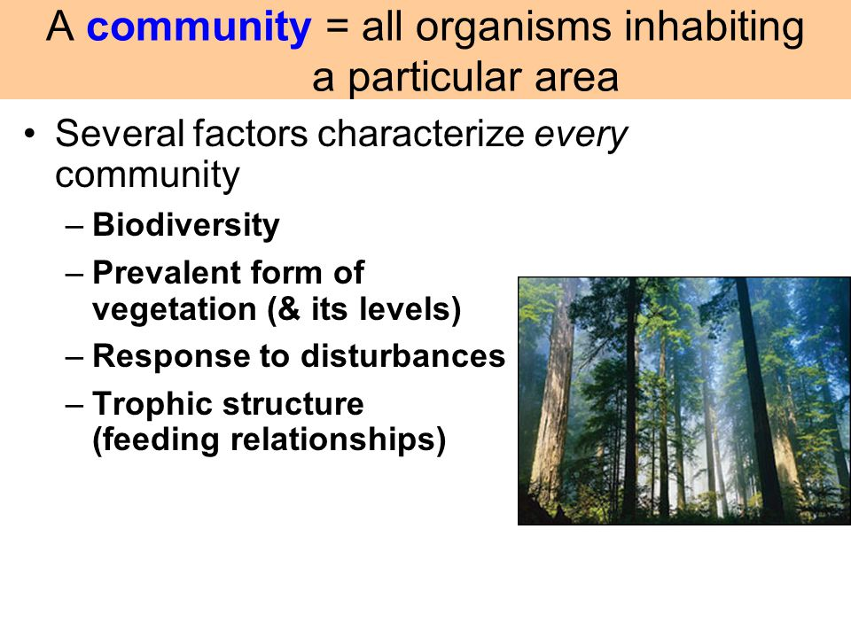 Several factors characterize every community –Biodiversity –Prevalent form of vegetation (& its levels) –Response to disturbances –Trophic structure (
