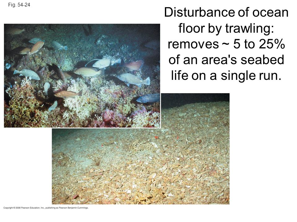 Fig. 54-24 Disturbance of ocean floor by trawling: removes ~ 5 to 25% of an area's seabed life on a single run.