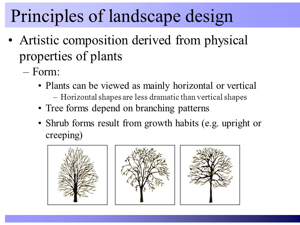 Artistic composition derived from physical properties of plants Principles of landscape design Plants can be viewed as mainly horizontal or vertical –