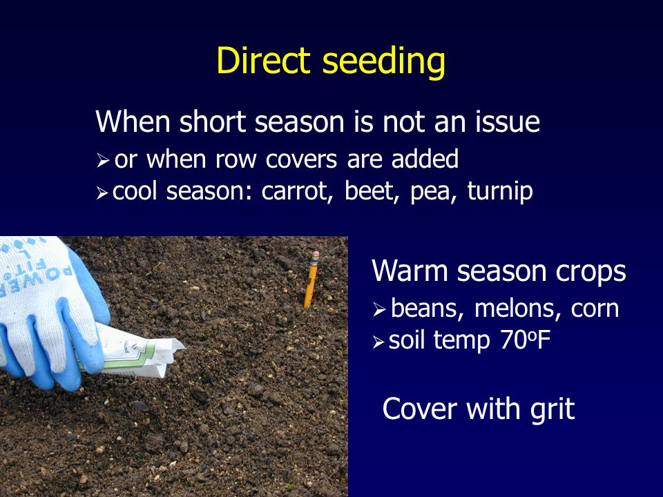 Direct seeding When short season is not an issue  or when row covers are added  cool season: carrot, beet, pea, turnip Warm season crops  beans, melons, corn  soil temp 70 o F Cover with grit