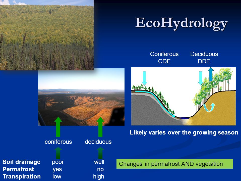 EcoHydrology Soil drainage poor well Permafrost yes no Transpiration low high coniferousdeciduous Coniferous CDE Deciduous DDE Likely varies over the