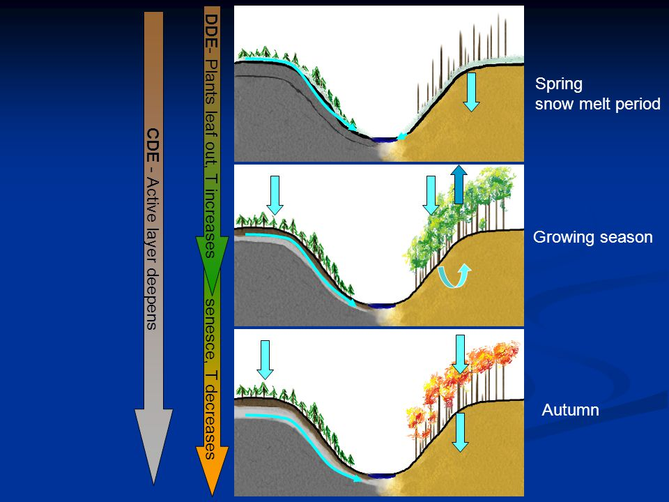 senesce, T decreases DDE - Plants leaf out, T increases CDE - Active layer deepens Spring snow melt period Growing season Autumn