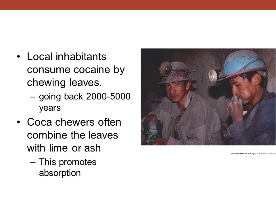 Local inhabitants consume cocaine by chewing leaves.