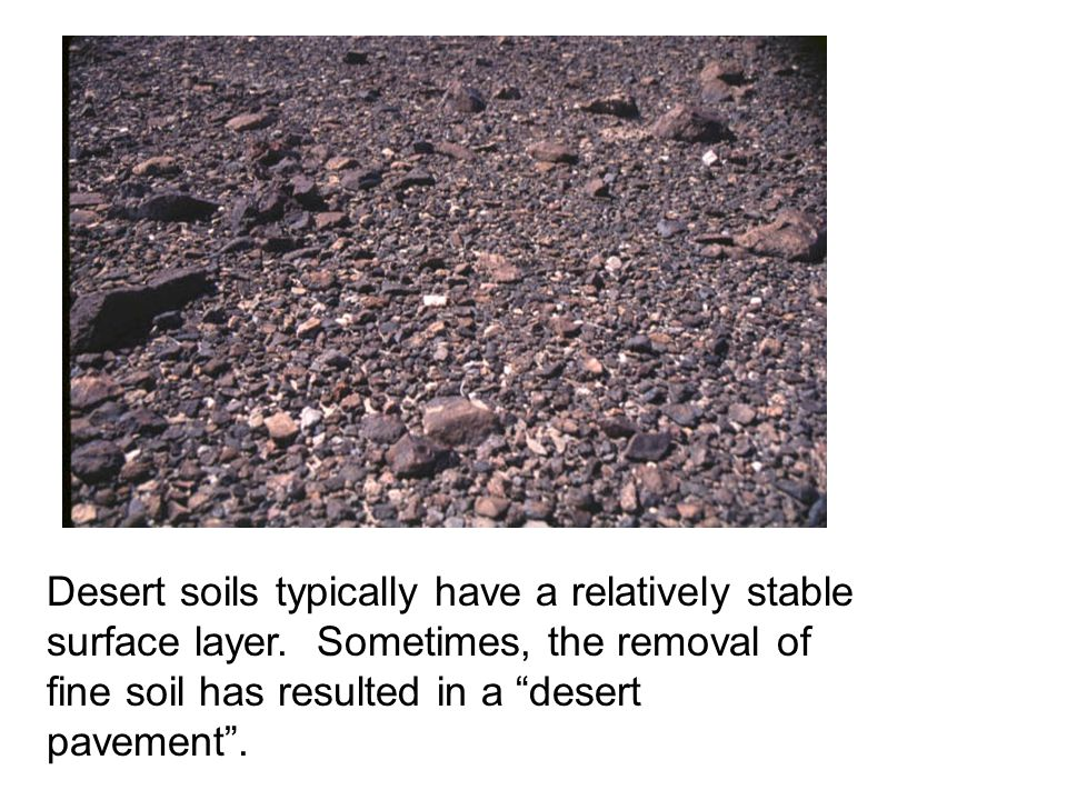 Desert soils typically have a relatively stable surface layer.